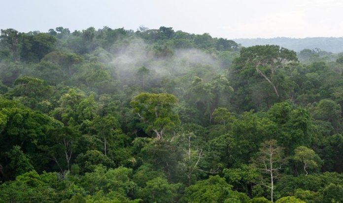 Откриена најстарата прашума во светот