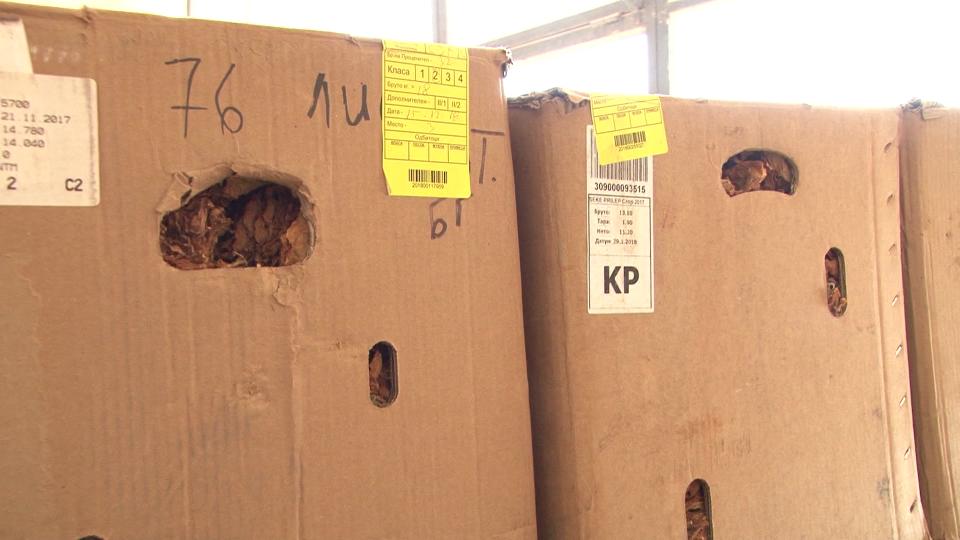Се влошуваат условите при откупот на тутунот во Долненско
