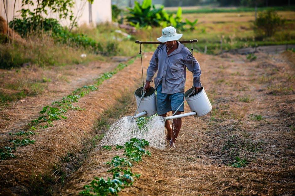 МЗШВ: Правила за движење на земјоделците во време на забрана за движење