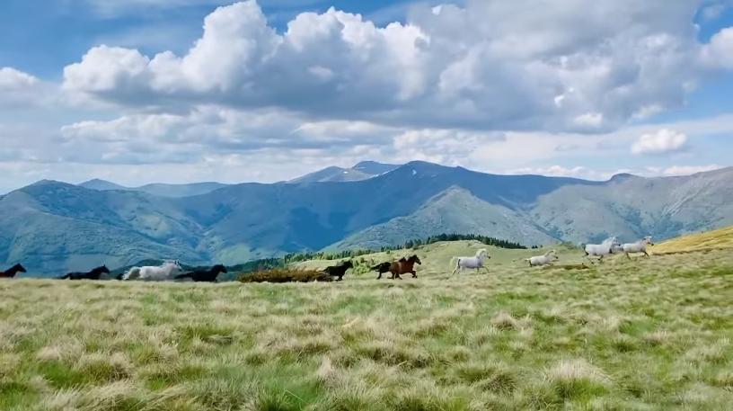 Диви коњи растрчани на Пелистер, видео што ќе ви го одземе здивот