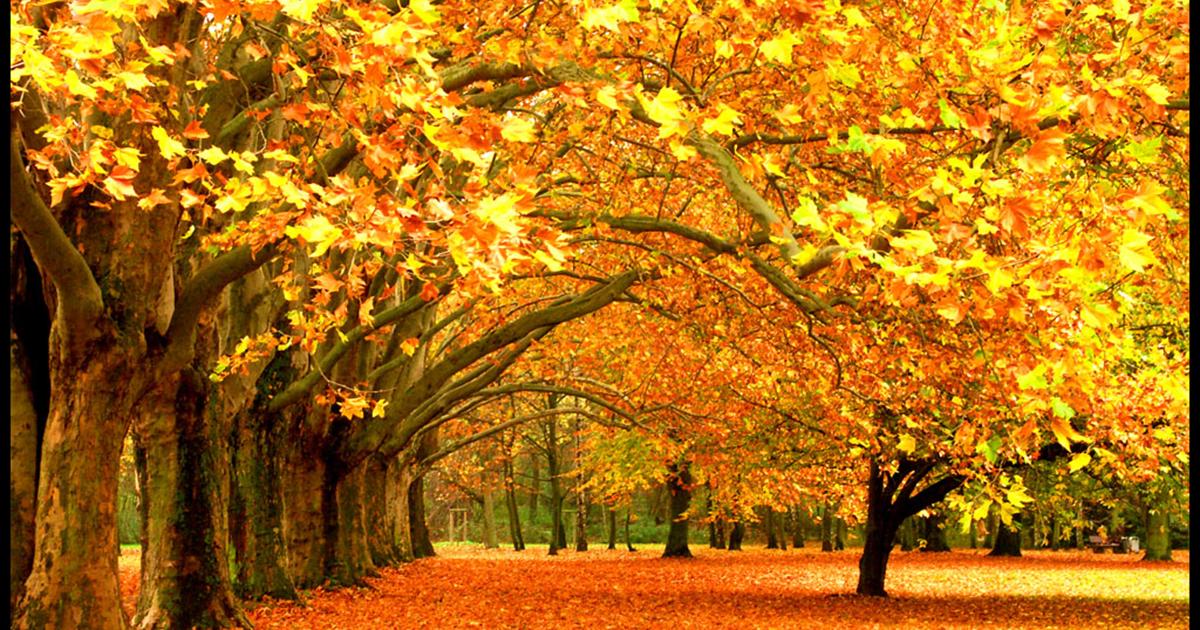 Денеска во 15:30 часот пристигнува есента