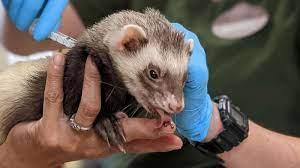 САД започнаа имунизација на животните во зоолошките градини