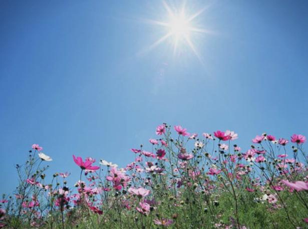 Сончево и топло време со мала облачност